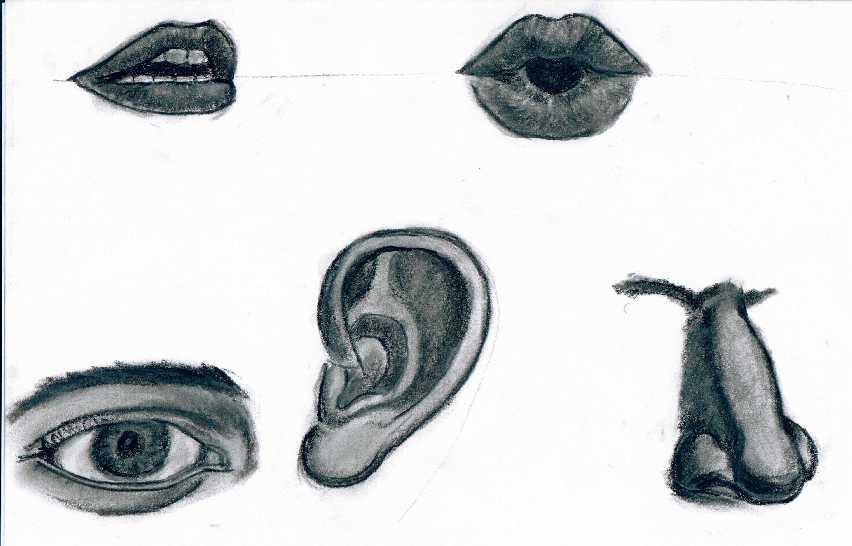 Dessin I081 1999 Bouche œil Nez Oreille Femme Homme